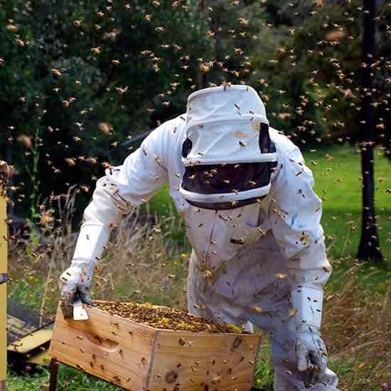 beekeeper-web_media jpg
